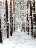 Foresta dello Snowy Fotografie Stock Libere da Diritti