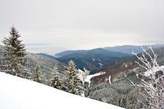 Foresta dello Snowy Immagine Stock