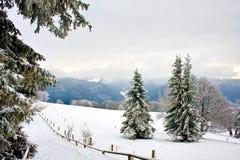 Foresta dello Snowy Immagini Stock