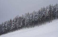 Foresta dello Snowy Immagini Stock Libere da Diritti
