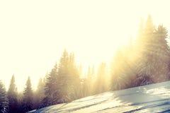 Foresta dello Snowy in inverno Immagine Stock
