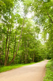 Foresta dello stato di Loyalsock Immagini Stock Libere da Diritti