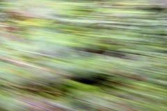 Foresta dello zoom Fotografie Stock