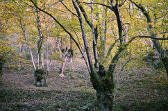 Foresta densa Fotografia Stock