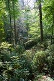 Foresta densa Fotografie Stock Libere da Diritti