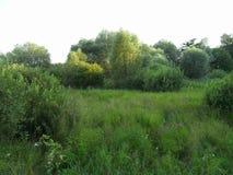 Foresta densa di estate fotografie stock