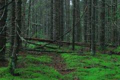 Foresta densa di estate scura fotografia stock