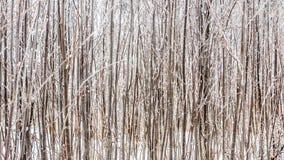 Foresta densa di inverno Immagine Stock
