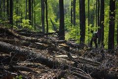 Foresta devastante Fotografie Stock Libere da Diritti