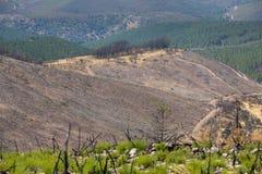 Foresta devastante fotografia stock libera da diritti