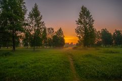 Foresta di alba Immagine Stock Libera da Diritti