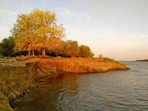 Foresta di Amazingl sul bordo di ripido fotografie stock libere da diritti