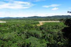 Foresta di Amazon Fotografie Stock