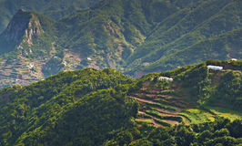 Foresta di Anaga Fotografia Stock