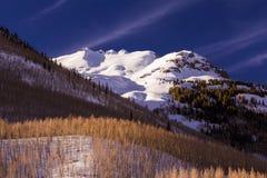 Foresta di Aspen Fotografie Stock