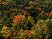 Foresta di Autemn Fotografie Stock