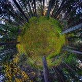 Foresta 7 di autunno Fotografia Stock Libera da Diritti