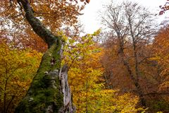 Foresta 33 di autunno Immagine Stock Libera da Diritti
