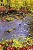 Foresta di autunno immagine stock