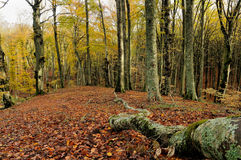 Foresta di autunno Immagini Stock