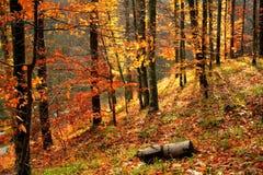 Foresta di autunno Fotografie Stock