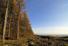 Foresta di autunno Immagini Stock Libere da Diritti