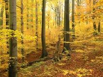 Foresta di autunno fotografia stock libera da diritti