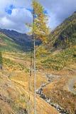 Foresta di autunno al dolina di Ziarska - valle in alto Tatras, Slovaki Fotografia Stock Libera da Diritti