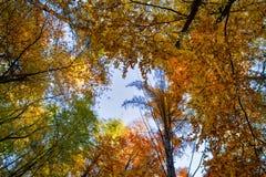 Foresta di autunno, alberi colorati in autunno, bello paesaggio ucraino dell'autunno Fotografie Stock Libere da Diritti