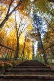 Foresta di autunno, alberi colorati in autunno, bello paesaggio ucraino dell'autunno Immagine Stock Libera da Diritti