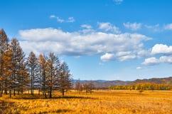 Foresta di autunno in Cina fotografie stock libere da diritti