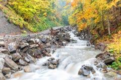Foresta di autunno con il flusso continuo del fiume fotografia stock