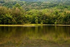 Foresta di autunno con il lago Immagine Stock