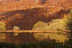 Foresta di autunno con la riflessione sul lago Biogradsko Fotografie Stock Libere da Diritti