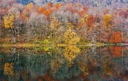 Foresta di autunno con la riflessione sul lago Biogradsko Immagini Stock Libere da Diritti