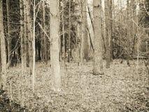 Foresta di autunno con le foglie cadute Fotografie Stock