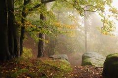 Foresta di autunno con nebbia Fotografia Stock Libera da Diritti