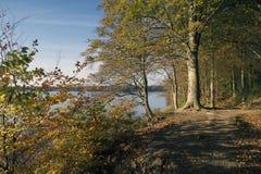 Foresta di autunno in Danimarca Fotografie Stock Libere da Diritti