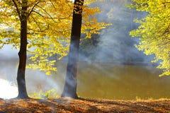 Foresta di autunno della nebbia Fotografia Stock