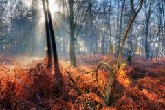Foresta di autunno di alba Immagine Stock