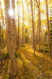 Foresta di autunno di Colorado Fotografia Stock