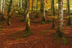 Foresta di autunno di Irati Fotografie Stock