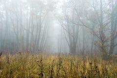 Foresta di autunno di mattina immagini stock