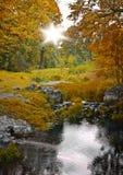 Foresta di autunno e flusso, paesaggio scenico Immagini Stock Libere da Diritti