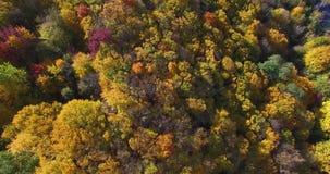 Foresta di autunno e nel tempo soleggiato e nel fiume fuori della città archivi video