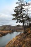 Foresta di autunno ed il piccolo fiume di Kizil nella località di soggiorno di Abzakovo, Russia fotografia stock