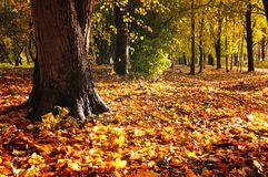 Foresta di autunno Foglie di autunno cadute che coprono gli alberi di autunno della foresta e di messa a terra Immagini Stock