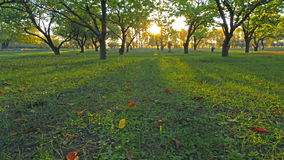 Foresta di autunno. 4K. HD PIENO, 4096x2304. archivi video