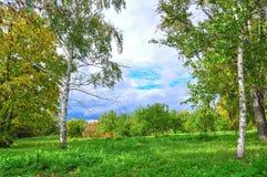 Foresta di autunno. La Russia Immagine Stock