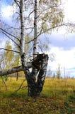 Foresta di autunno. La Russia Fotografia Stock
